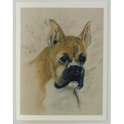 Boxer Notecards