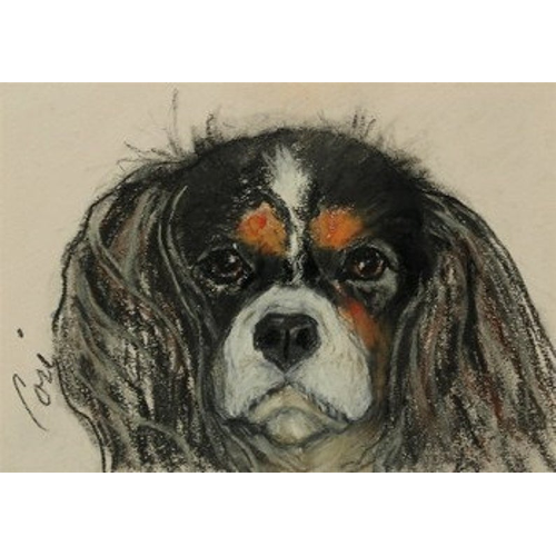Cavalier King Charles Notecards