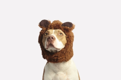 Dog in bear costume