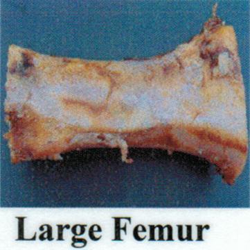 Pet Deli Case of Beef Femurs (Large)