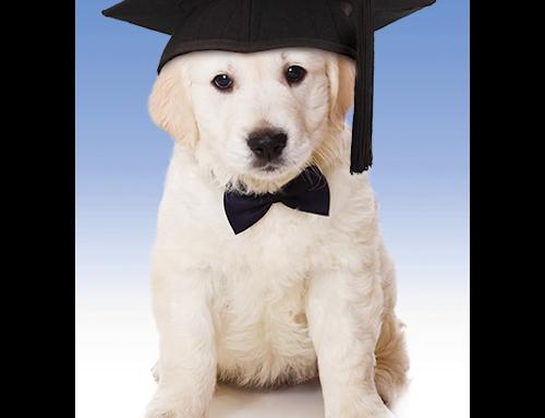 New Saturday Dog Obedience Class